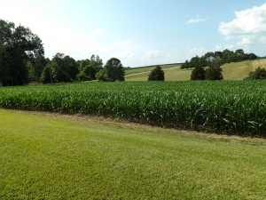 Beautiful Indiana farmland.