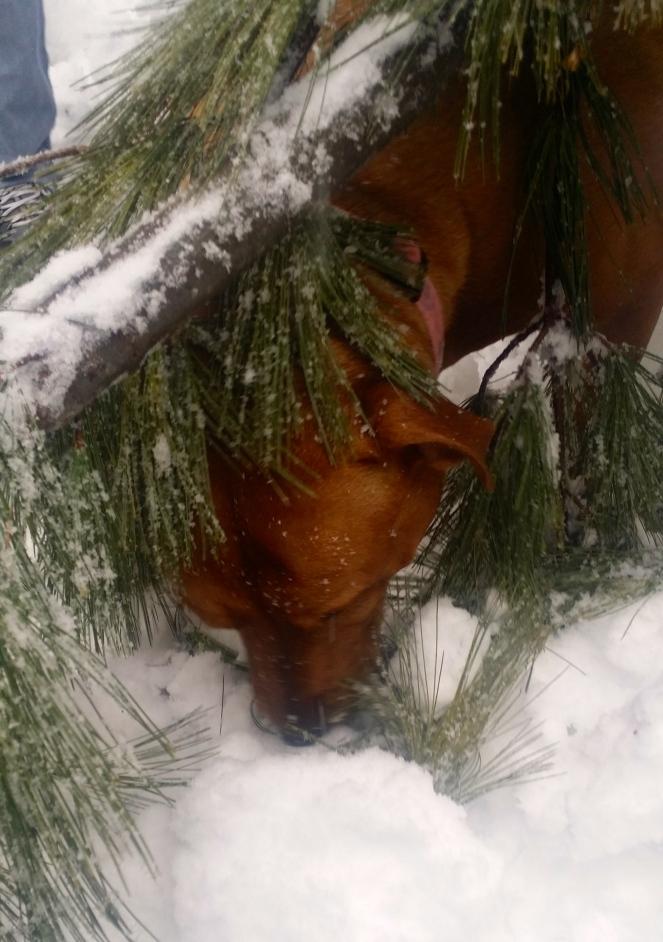 Roxie the snow dog