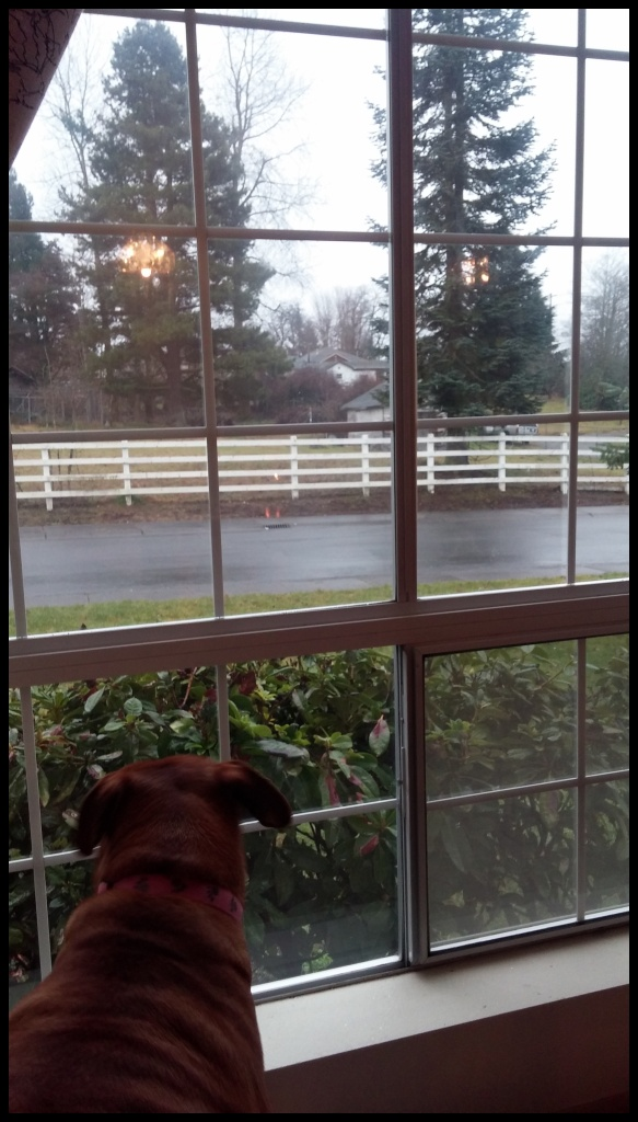 View from the parlor, 01/23/15