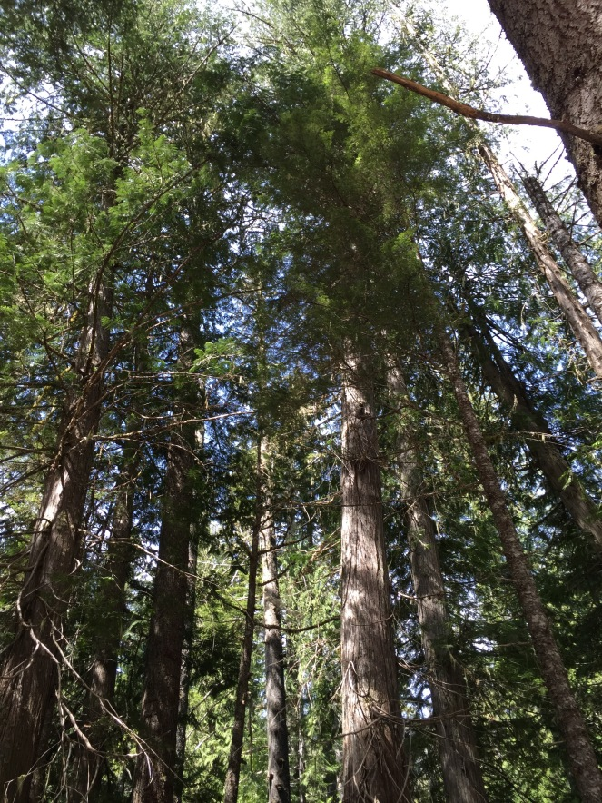 And then we stopped again at this grove of trees, which are so tall that they can't fit into one shot.